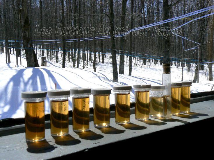 Échantillons de divers sirop d'érables. Ces derniers se déclinent en différentes épaisseurs et colorations, déterminant leur qualité selon les critères en la matière.