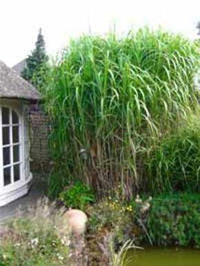17 best ideas about gartenpflanzen winterhart on pinterest, Garten Ideen