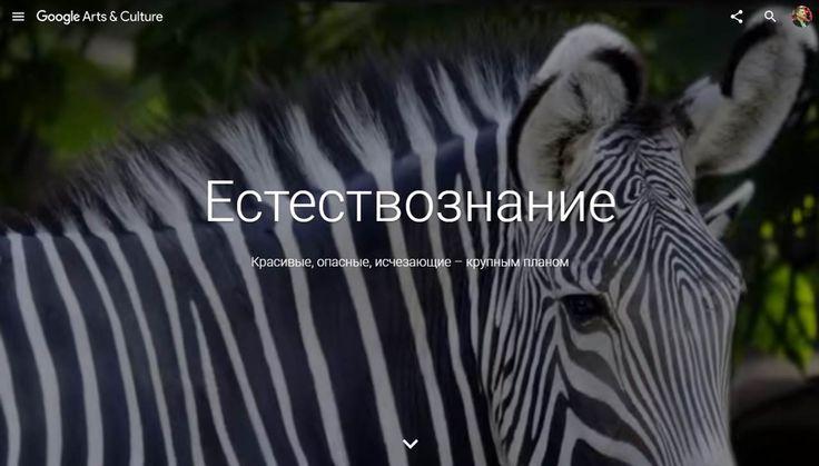 Виртуальная выставка «ЕСТЕСТВОЗНАНИЕ» от Google | Дидактор