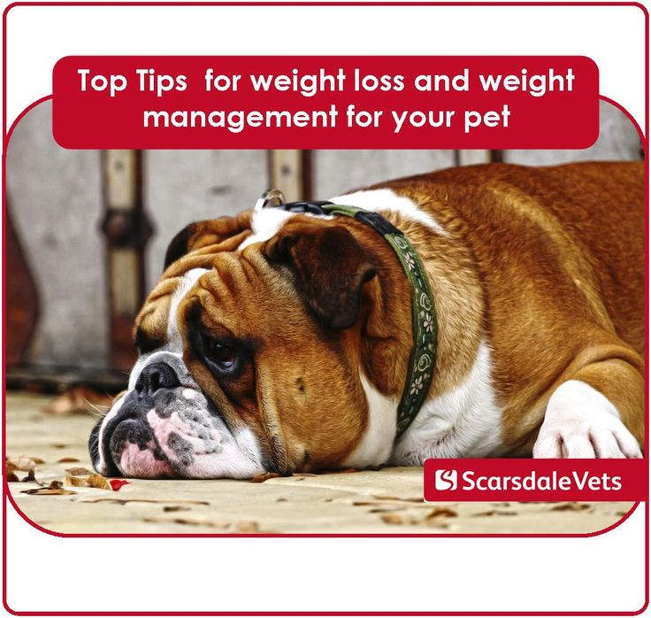 Top tips for weight loss and weight management for your pet