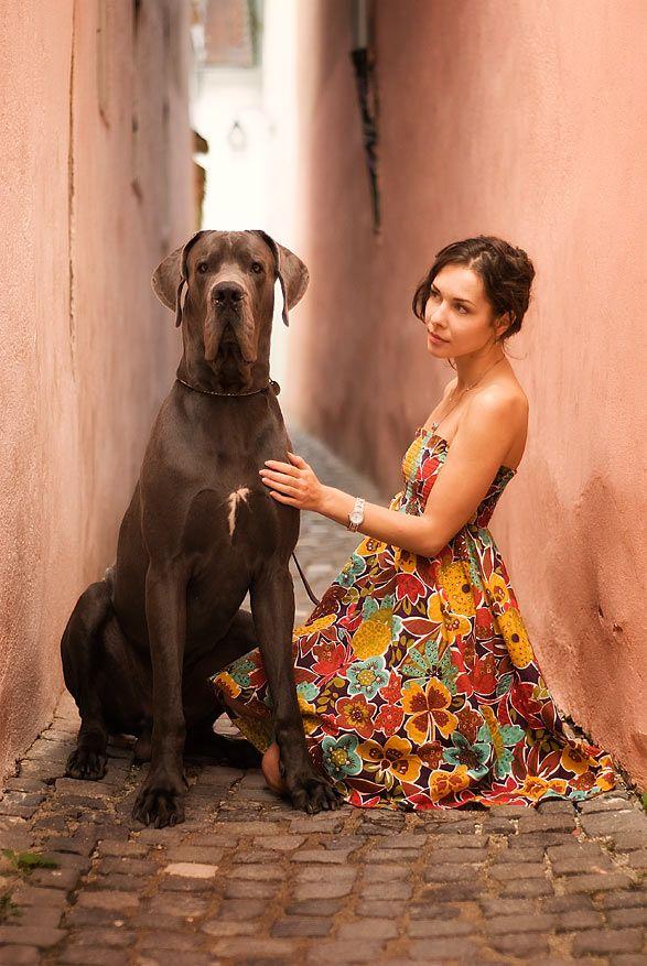 #Great #Dane / by belu gheorghe, via 500px