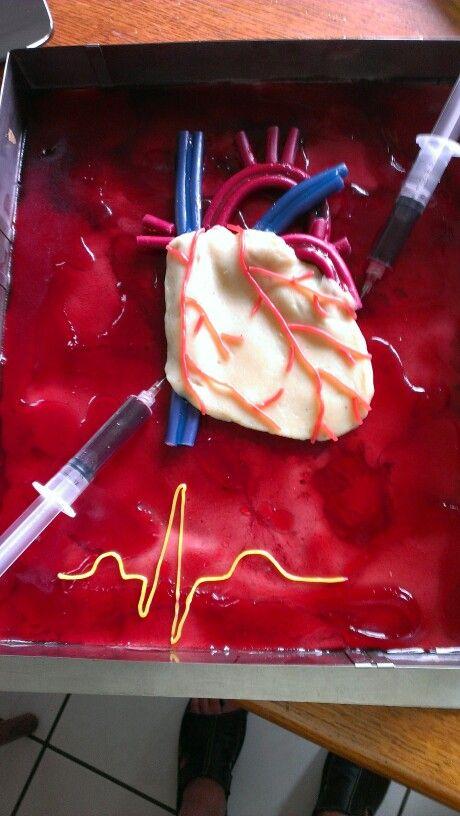Orginal Herz anatomisch korrekt..sehr ausgefallen für eine Freundin gebacken zum Einstand .Sie arbeitet im Herzkatheter .
