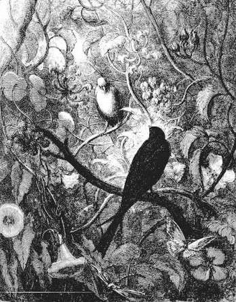 Philomèle et Progné, Fable de Jean de la Fontaine illustrée par Gustave Doré - LIVRE TROISIÈME