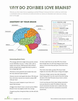 Parts of the Brain Science worksheets, Ap psychology