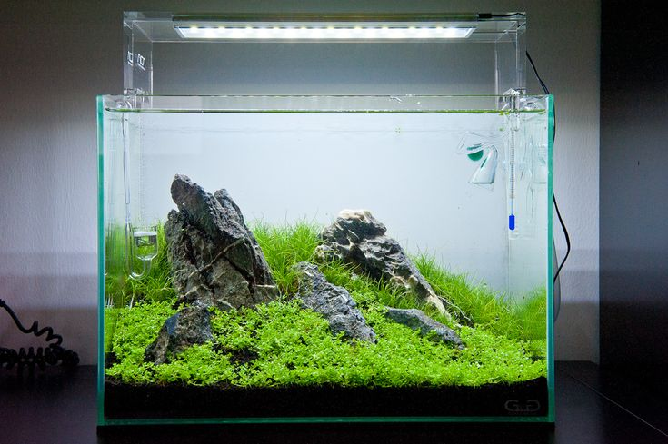 New aquasky LED lighting from ADA, So awesome Nature Aquariums ...