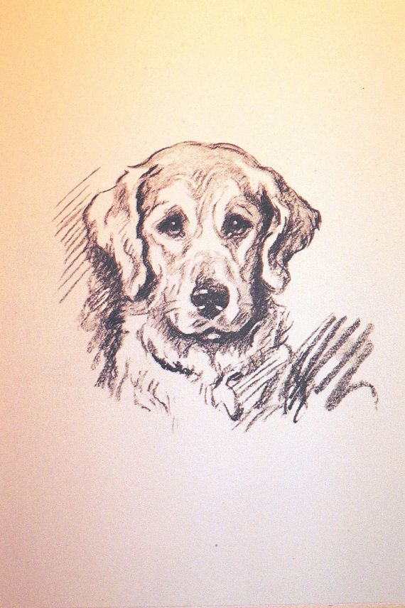 Vintage Mounted 1936 'Mac' Lucy Dawson Labrador puppy dog face plate print  gift