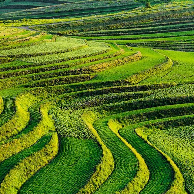 Photograph by Michael Yamashita @yamashitaphoto - This is China? Driving the Grass Skyline, renowned for its spectacular scenery, over 83 miles of rolling hills, vegetable farms and grasslands. Called Chinas route 66, it's located just 3 hours north of Beijing, near the future site of the 2022 Olympic Winter Games. #grassskyline #hebei #china #beijingolympics @thephotosociety @natgeocreative @supchinanews