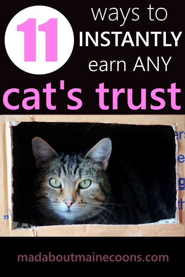 193c55bc626b4c679e367db4726fd6b4 - How To Get A Wild Kitten To Trust You