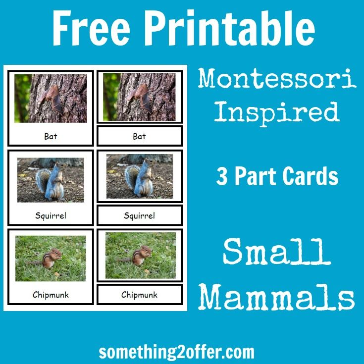 Free printable Montessori inspired 3 part cards for small mammals #TheNatureBookClub