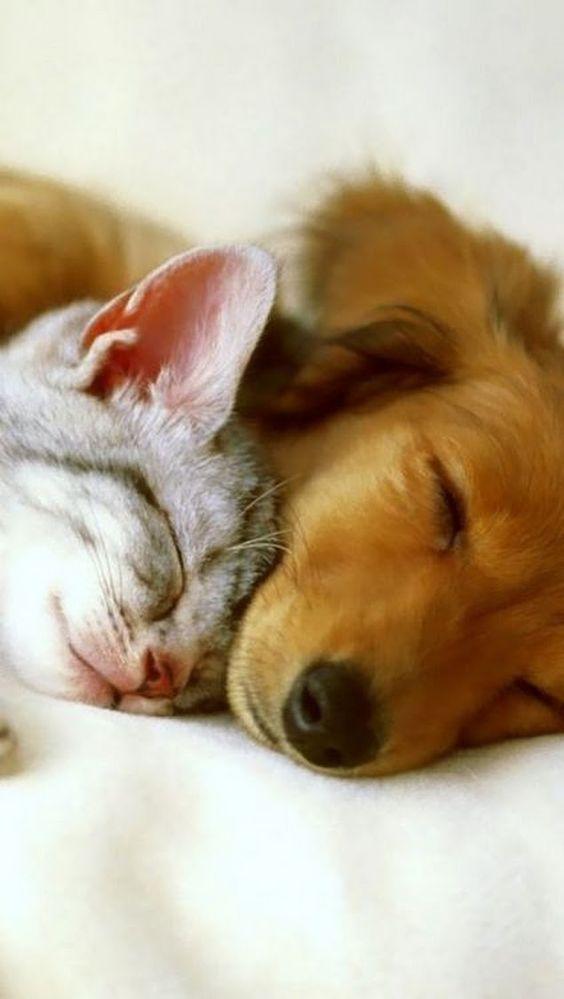 Amour de chats et chiens 🧡🧡🧡 chats calin , Chats et chatons, chaton  mignon ,bébé chat ,beaux chats, chat trop mignon chatjadore chats