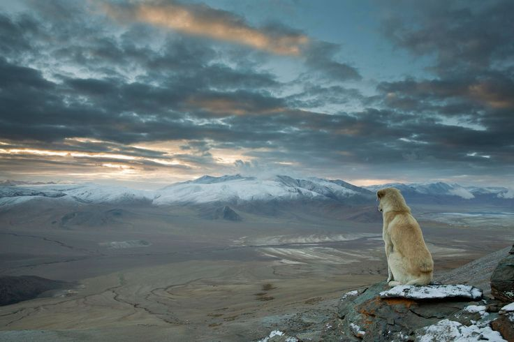"""Em meu novo livro, """"67 Reasons Why Cats Are Better Than Dogs"""", eu resolvo a questão de gatos contra cachorros de uma vez por todas. Usando ciência e lógica. Aqui estão apenas algumas das razões que explicam por que os gatos são melhores."""