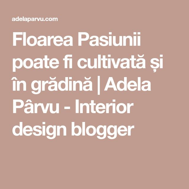 Floarea Pasiunii poate fi cultivată și în grădină | Adela Pârvu - Interior design blogger