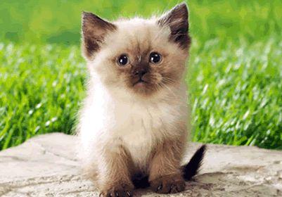 gattino che augura buon compleanno