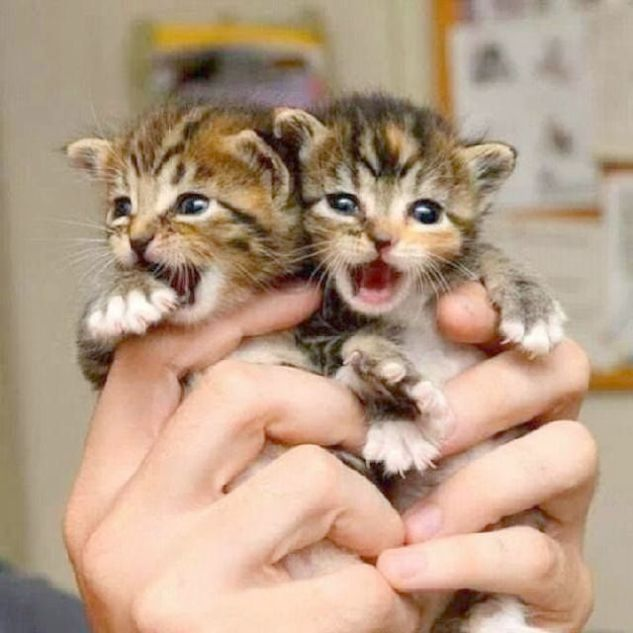 Take Me To Your Tuna With Images Baby Cats Kittens Cutest