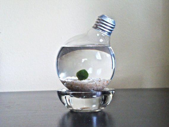 Marimo Moss Ball in a Repurposed Light Bulb  by eGardenStudio, $19.50: Repurpo Lights, Idea, Ball Lights, Aquarium, Lights Bulbs, Marimo Moss Ball, Aqua Terrarium, Lightbulbs Aqua, Repurposed Lights