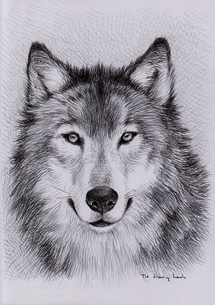 Best 25+ Wolf drawings ideas on Pinterest | Awesome drawings ...