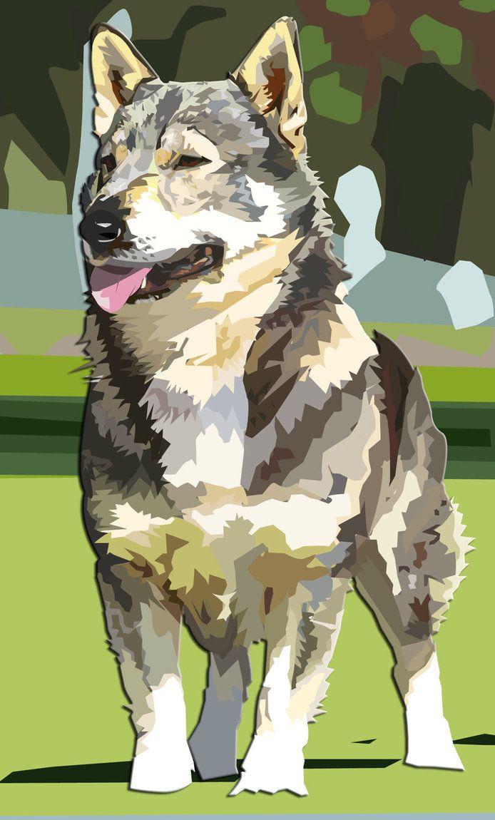 Swedish Herding Dog That Looks Like Corgi