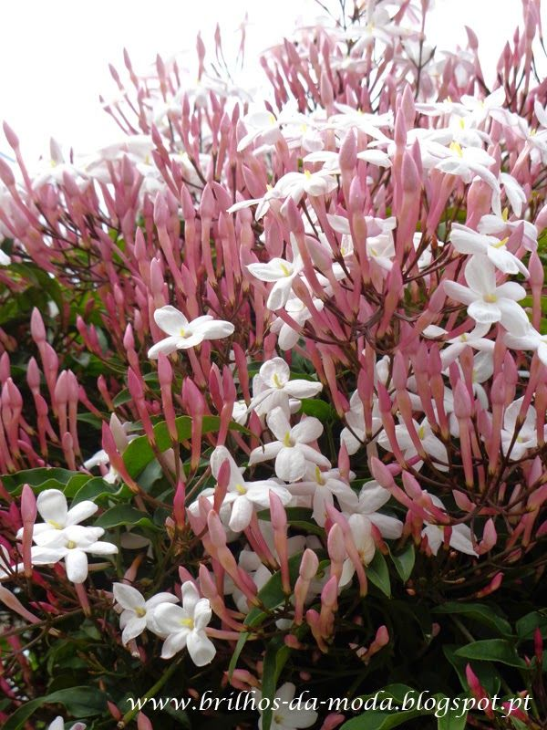 Brilhos da Moda: Flores, uma maravilha da natureza # 31
