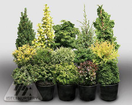 Fanciful Gardens® miniature trees