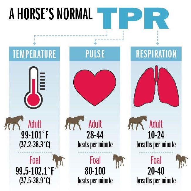 A Horse's Normal TPR