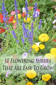 10 Flowering shrubs that are easy to grow.