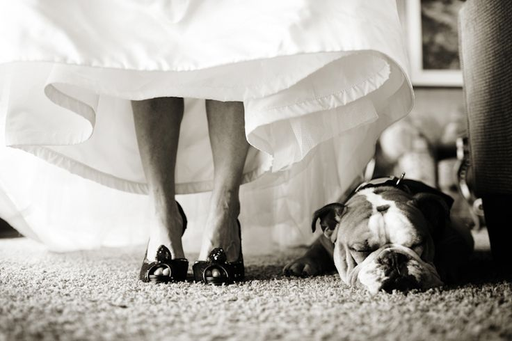 Bride and bulldog - love this! :D || Lake Tahoe Destination Wedding from Luxe Mountain Weddings Magazine