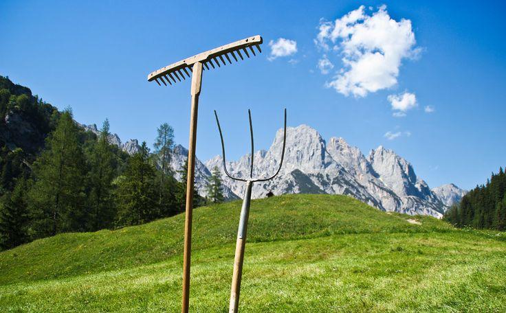 Heuernte wie anno dazumal auf der Bindalm - Berchtesgadener Land Blog