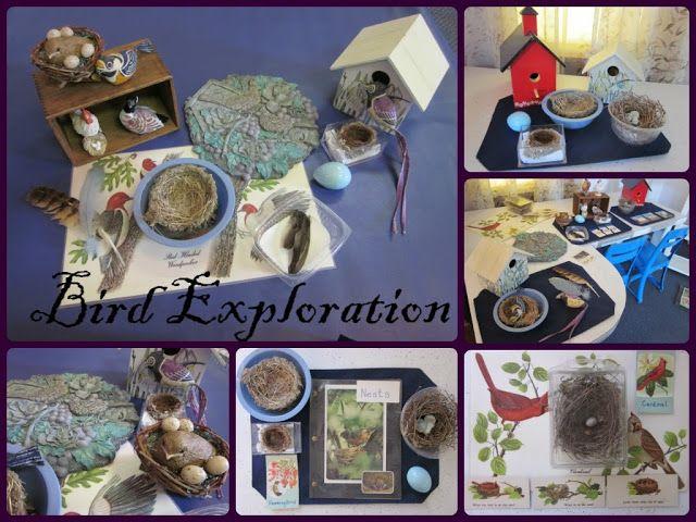 Bird Exploration from Inspired Montessori and Arts at Dundee Montessori