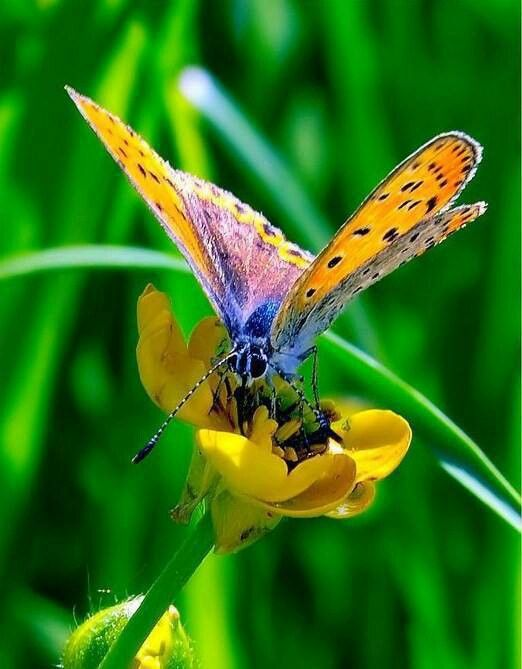 """xx-""""Nature's message was always there and for us to see. It was written on the wings of butterflies.""""  ~~ Kjell B. Sandved"""