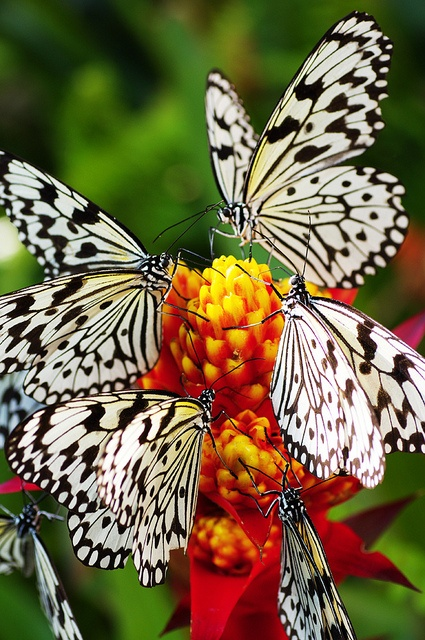 Would love to know where I could find these butterflies, would love to photograph them.