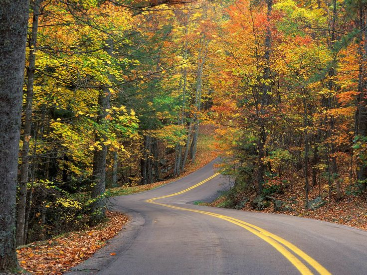 Fall into fall: Forests, The Roads, Country Roads, Seasons, Desktop Backgrounds, Roads Trips, Autumn Colors, Leaves, Wind Roads