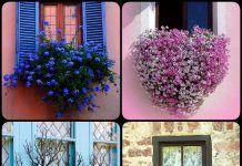 8 idéias bela janela caixa do plantador