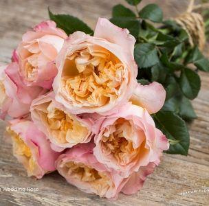David Austin Wedding Rose Edith