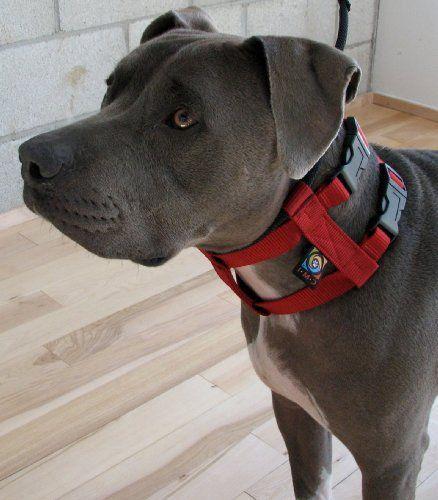 Dog Whisperer Bark Collar