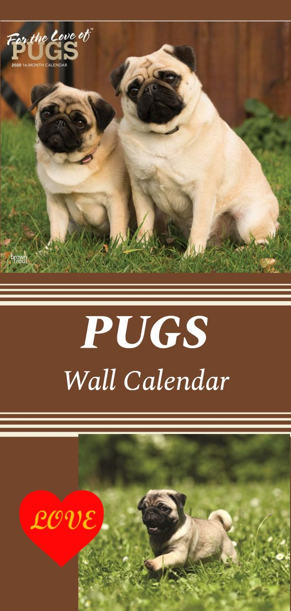 If You Like Pug Dogs This Calendar Has A Collection Of Different