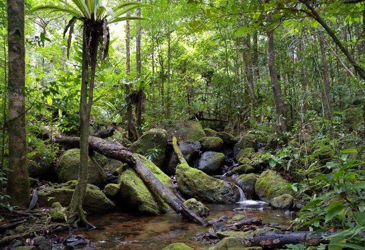 Тропические леса Ацинананы