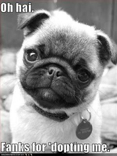 Pug Love...Adopt a Pug (or any shelter/rescue buddy) Today!