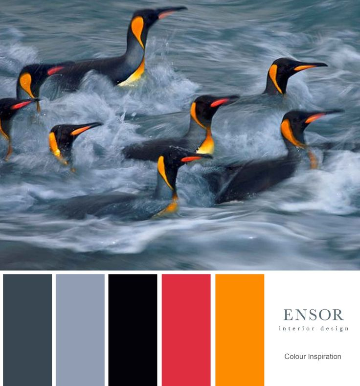 Love this fun colourway created by swimming penguins. #fun #colour #design