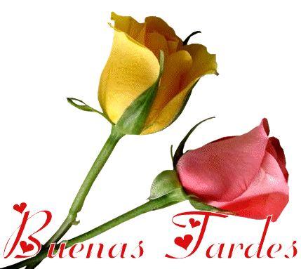 Precioso par de rosas para regalar y dar las Buenas Tardes