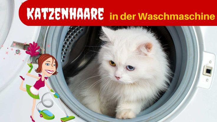 Wer Haustiere hat kennt das. Hunde und Katzen verlieren Haare, die sich in der Wohnung verteilen dann früher oder später auch in der Waschmaschine landen.