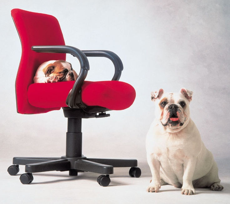 97 best Pet Approved Knoll images on Pinterest