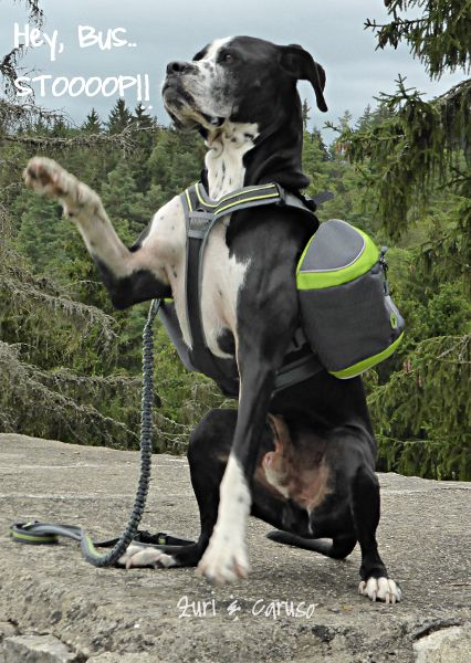 Follow Zuri & Caruso on the big adventure; hiking from Germany to Italy! https://www.facebook.com/pages/Zuri-Caruso-dogs-on-tour/246717438868214