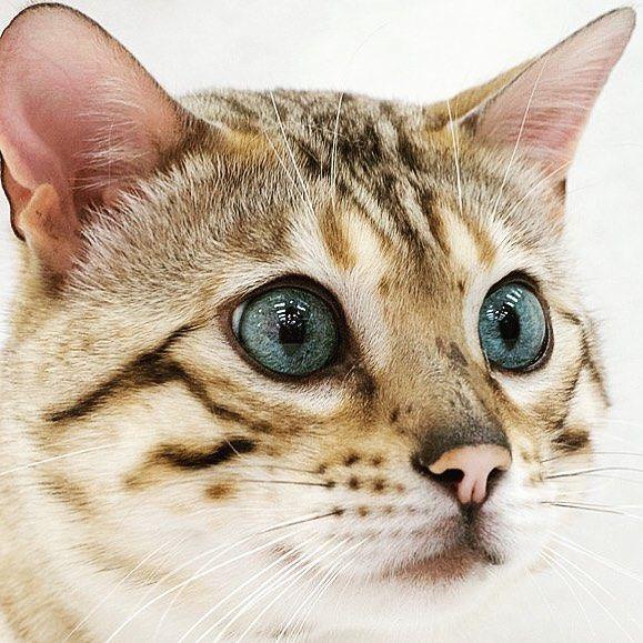 Cute Kitten Cat Cats Cutecats Kitty Kitties