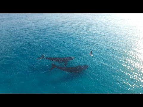 Дрон засне срещата на сърфист с два кита (ВИДЕО)