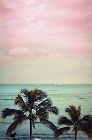 Palmera con vistas a la playa