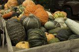 http://foodpreservation.about.com/od/Freezing/fl/How-to-Freeze-Pumpkin-and-Winter-Squash.htm