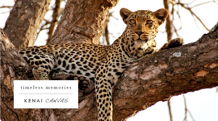 Our canvas printing categories include wildlife & plantlife, landscapes, people & abstracts, wheels & wings, composites & panoramas. Contact me on arno@kenaicanvas.co.za or call: 062 483 8925 and take a look on our website: http://www.kenaicanvas.co.za/ #KenaiCanvas #art #beauty