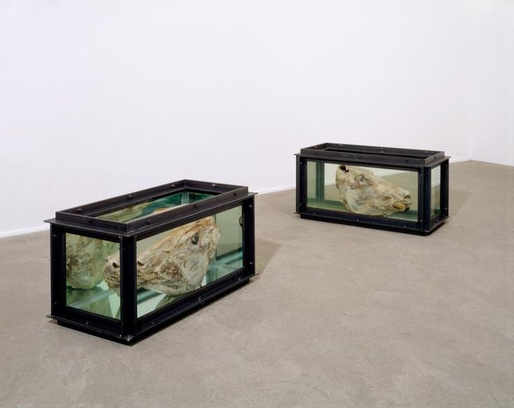 Damien Hirst - Out of Sight. Out of Mind., 1991