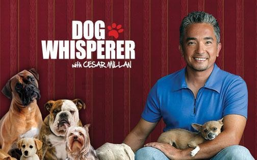 Dog Whisperer  Dog behavior expert who accomplishes AMAZING results. Love to see his programs.