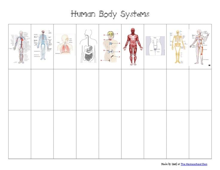 Human Body Systems Chart Pdf Google Drive Printables